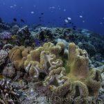 Snorkeling-2.jpg